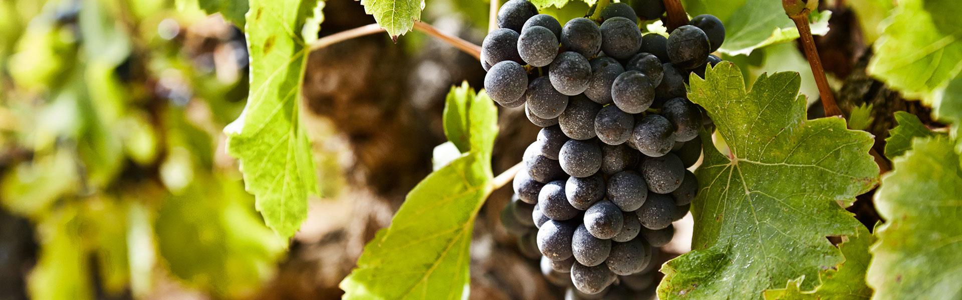 Vin og gourmet